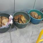 Animais - Posto dá abrigo a cães de rua no frio do sul