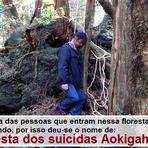 Mistérios - A floresta dos suicídios - Aokigahara.