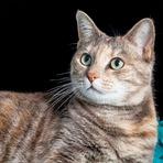 Curiosidades - O gato doméstico mais velho da atualidade tem 24 anos