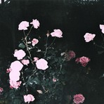 Poesias - Floresça-me - Poesia