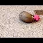 Internacional - Sulcoreanos enviam doces de chocolate proibido para vizinhos do Norte