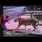 Novo vídeo do ataque do tigre ao menino de 11 que teve o braço amputado