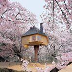 Casas magicas arquitetonicamente