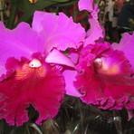 Meio ambiente - 9º Festival de Orquídeas e Plantas Ornamentais de São Roque