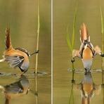 Curiosidades - Fotógrafo de vida selvagem faz imagens incríveis ganhando a confiança dos animais