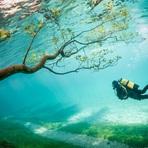 Conheça as fotografias campeãs do concurso da National Geographic de 2014