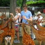 Animais - Nara, a cidade dos cervos no Japão
