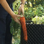 Air-Pot: Novo vaso produz legumes gigantes