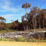 Meio ambiente - Perdão das multas por desmatamento ilegal é regulamentado pelo Ibama
