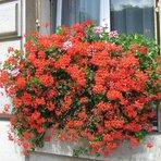 Espaço - Flores para jardim dicas