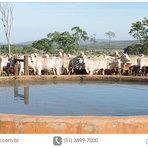 Animais - Como captar água para uso na pecuária leiteira