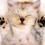 Animais - Filhotes de gatos