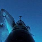 Animais - Veja como é ser perseguido e atacado por um tubarão (video)