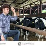 Animais - Gado de leite - saiba mais sobre o melhoramento genético