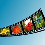 Softwares - Efeito película de filme 2 - Pixlr