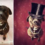 Fotos - Imagens surreais de cães abandonados para incentivar adoção