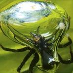 Curiosidades - Conheça a única aranha que passa o dia todo embaixo d'águaConheça a única aranha que passa o dia todo embaixo d'água