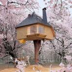 Curiosidades -  O sonho da casa na árvore