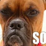 Curiosidades - Cães são capazes de sentir ciúmes?