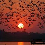 Curiosidades - Revoada de Pássaros!