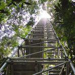Torre de 325 metros vai monitorar mudanças climáticas na Amazônia
