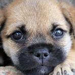 Legal -  Cão virtual interage em anúncio eletrônico para promover adoção