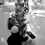 O tigre e o menino