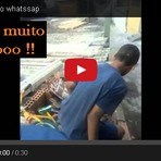 Humor - Videos Legais do whatssap ( olha cara do maluco ) kkk