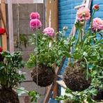 Utilidade Pública - Jardim Suspenso - Dicas, Modelos, Fotos