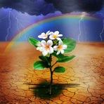 Pregações e Estudos Bíblicos: Tudo se fez novo