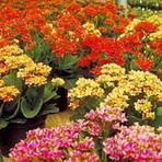 Arquitetura e decoração - Significado das Flores
