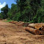 Dia da Sobrecarga da Terra chega cada ano mais cedo, diz WWF