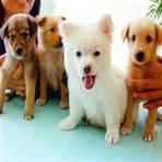 Animais - pet-shop-online/ Conheça as dicas como montar  um com sucesso