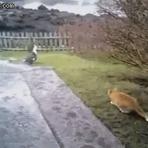 Animais - Gatos trapalhões