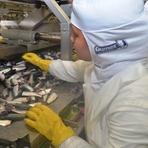 Pintura - Programa Bem Estar mostra benefícios da sardinha enlatada em Itajaí