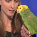 Animais - Provavelmente este é o papagaio mais inteligente do mundo. Veja por quê!