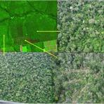 Meio ambiente - Degradação da floresta amazônica atinge 38,7 mil Km² em 3 anos