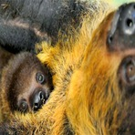 Animais - Como são os filhotes de animais selvagens?