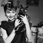 Animais - 10 celebridades femininas iconicas com seus gatos