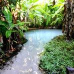 Meio ambiente - Encantos da natureza: Fervedouros do Jalapão