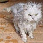Animais - Fotos Engraçadas de Gatos