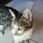 Animais - AMO GATOS conheçam minha gatinha