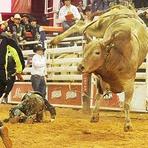 Animais - 'Agressivo' é eleito o touro mais temido no Brasil.