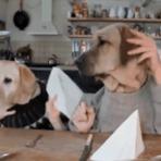 Animais - Cachorros educados no restaurante