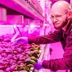 Nova tecnologia lança luz sobre o futuro da alimentação (com video)