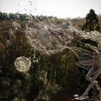 Conheça o trabalho de um escultor que cria fadas com arame