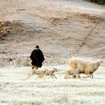 Entretenimento - Um passeio pelo inverno Gaúcho!