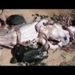 Vídeo incrível: suposta aparição real de sereia morta na praia; veja