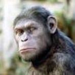 Ética dos macacos