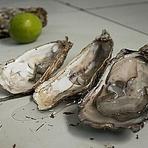 Porto Belo e Governador Celso Ramos têm consumo de moluscos proibido